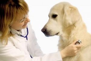 Doctor_Dog (1)