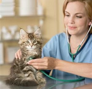 veterinar-dlya-koshki134874190857