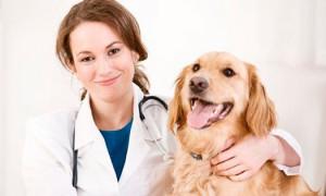vyzov-veterinara-na-dom