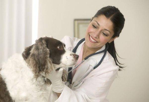dog-vaccination-1