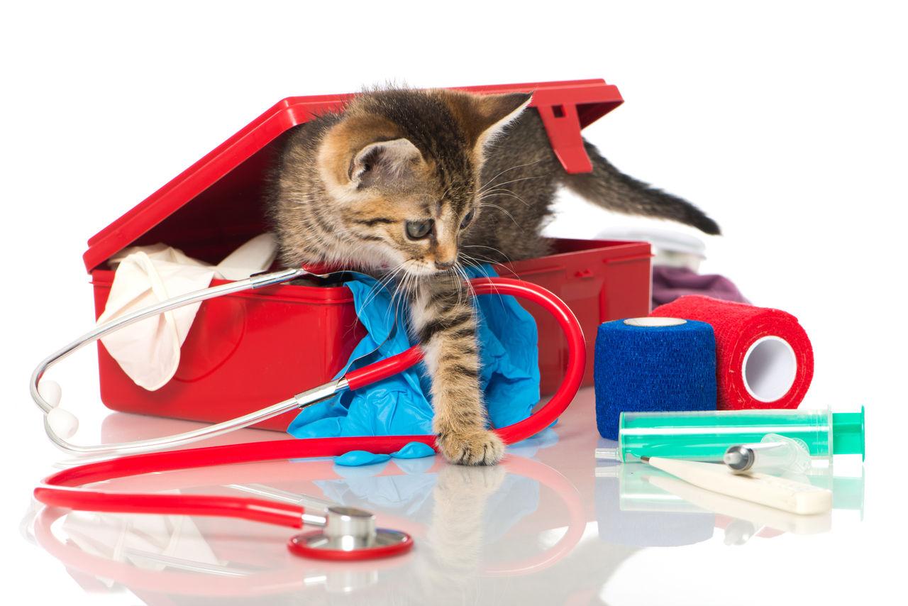 kit_cat