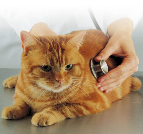 veterinarnaya-klinika-anapa